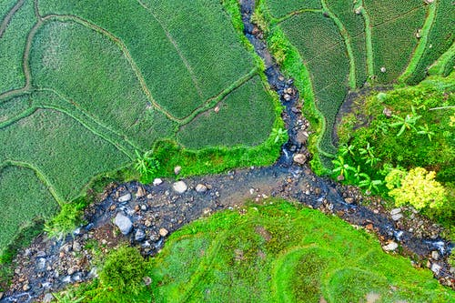 Aerial view of narrow brook with pebble running through abundant green agricultural rice terraces