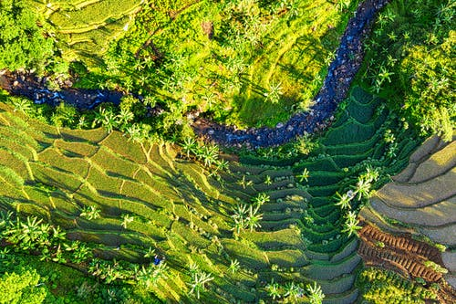 Rice fields on hill divided on terraces