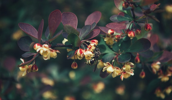 Free stock photo of nature, flowers, animal, petals