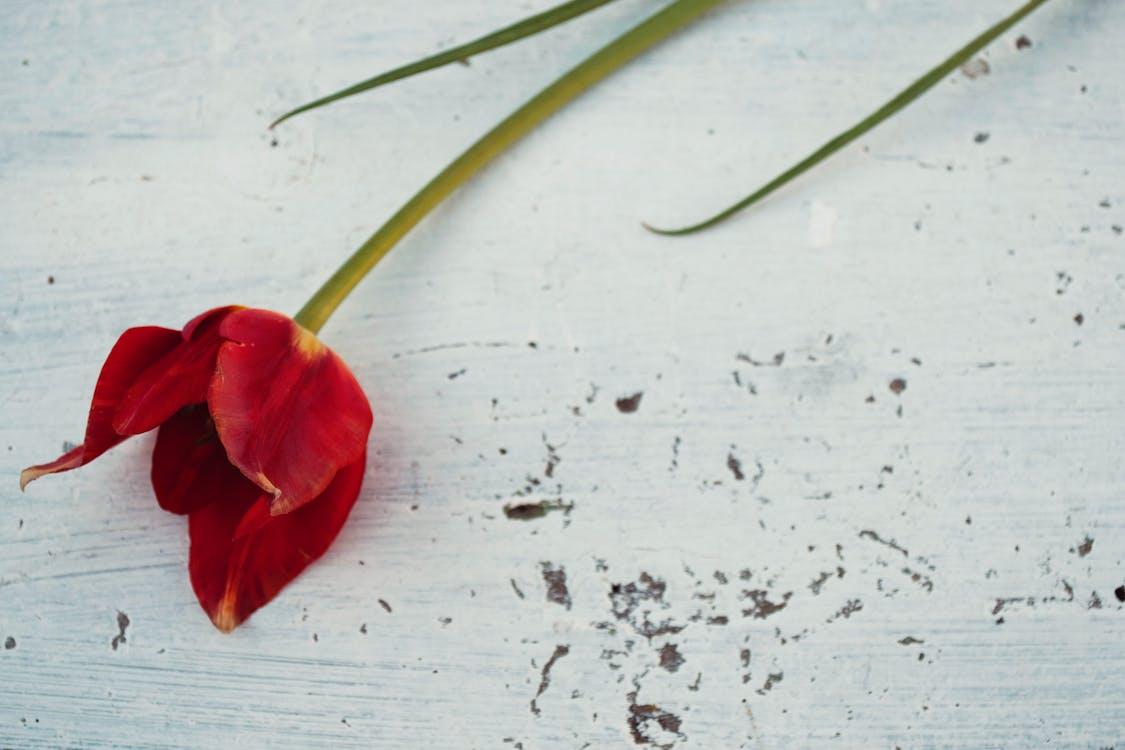 Immagine gratuita di fiore, fiore rosso, legno
