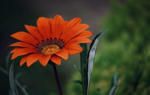 Orange Petaled Flowering Plant
