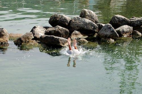 Δωρεάν στοκ φωτογραφιών με dip, βλέπω, νερό