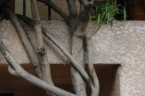 Δωρεάν στοκ φωτογραφιών με δέντρο, παράξενος