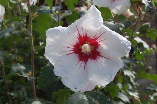 Fotobanka sbezplatnými fotkami na tému biely kvet, kvet