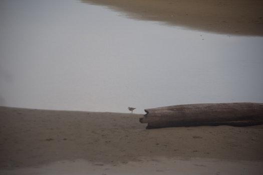 Free stock photo of bird, beach, river, seashore