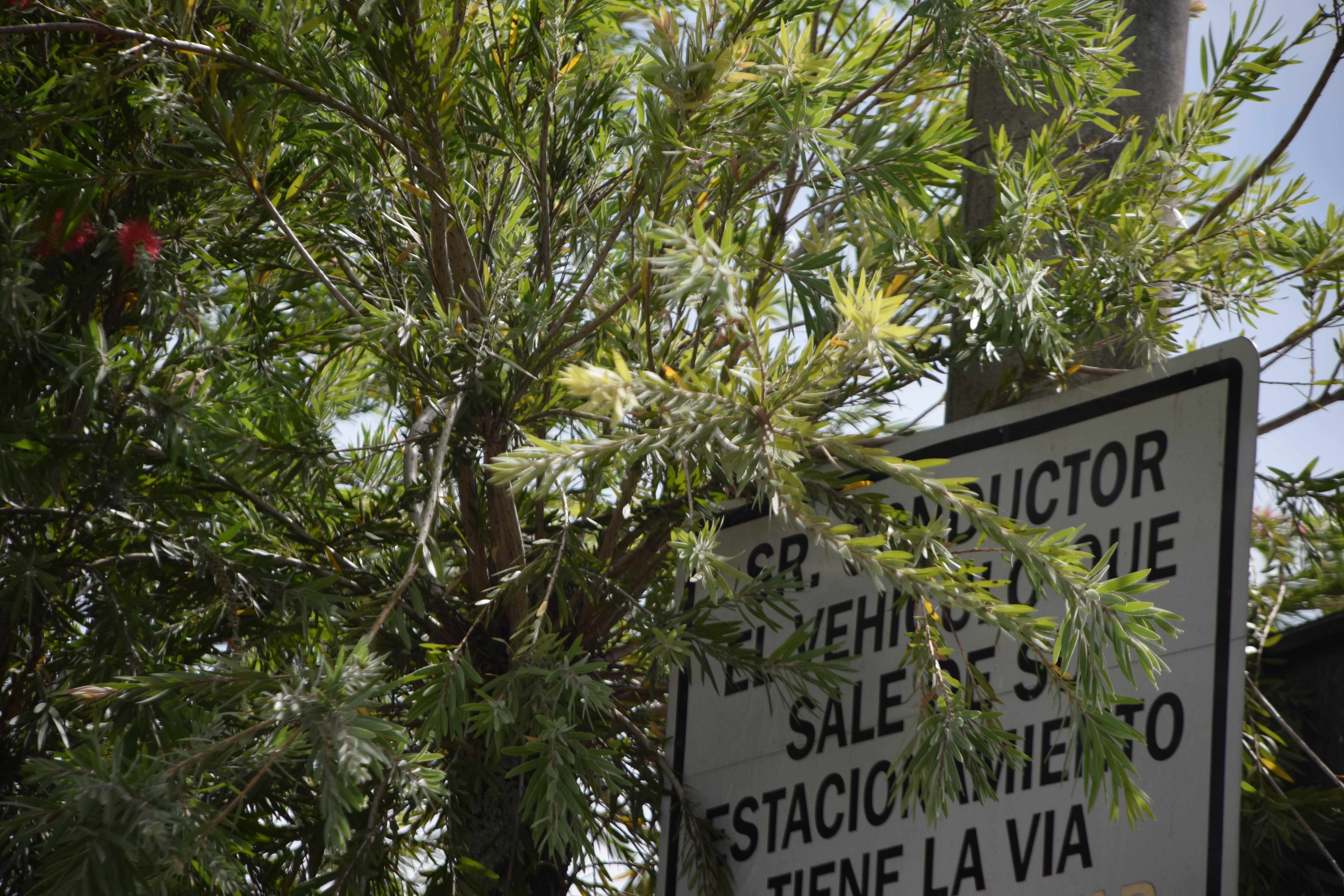 Free stock photo of sign, trees, leaves