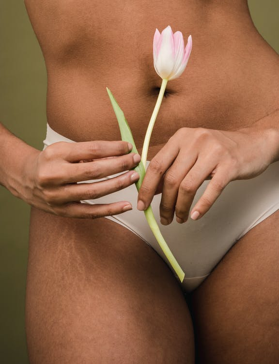 Crop faceless female in white panties with stretch marks on hips holding aromatic tulip near belly against beige background