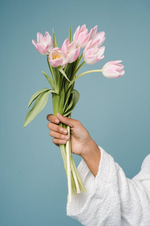 Crop anonymous woman in white bathrobe demonstrating bouquet of delicate pink tulips against blue background in studio