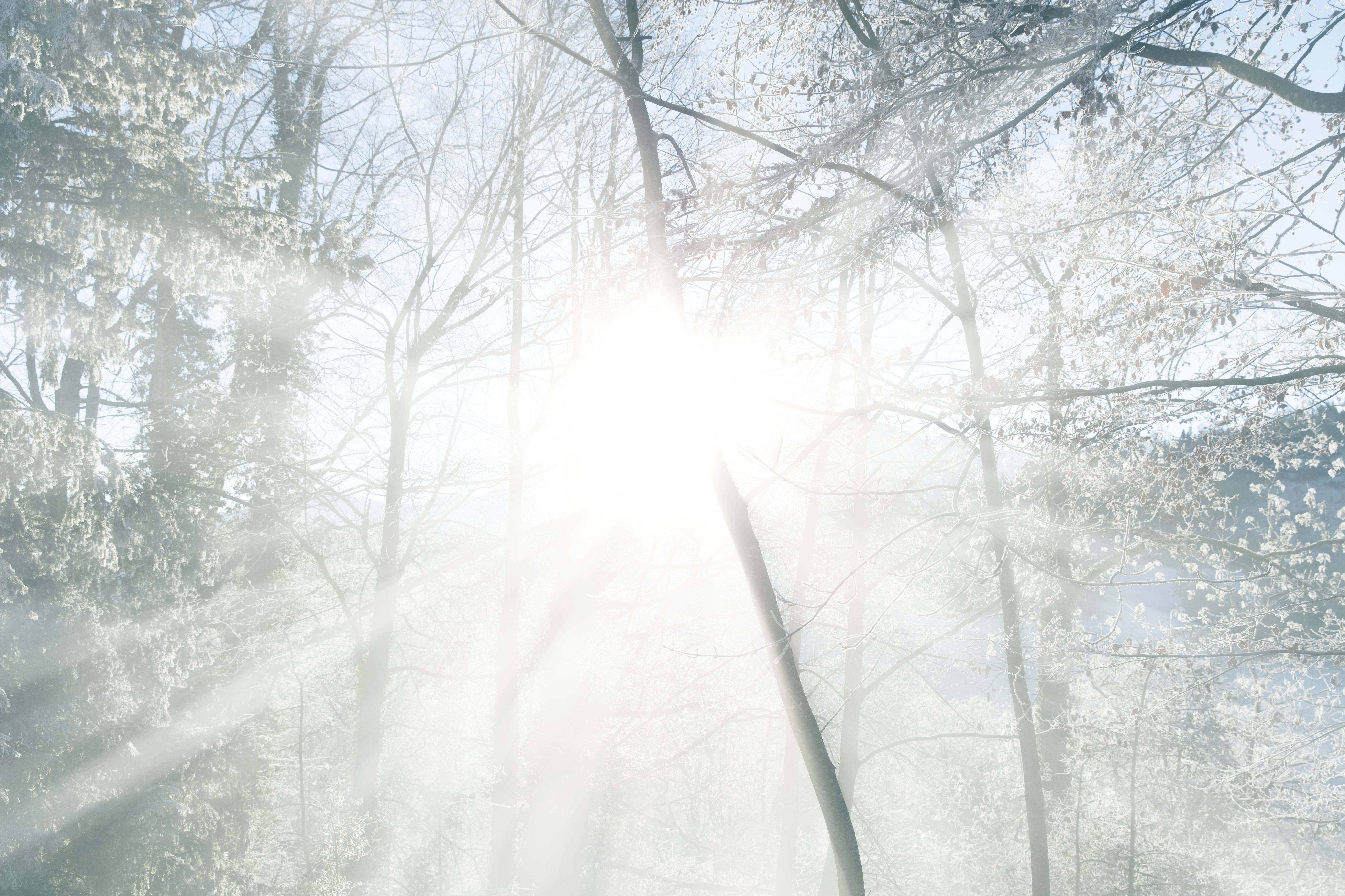 Free stock photo of blue, cold, forest, morning sun