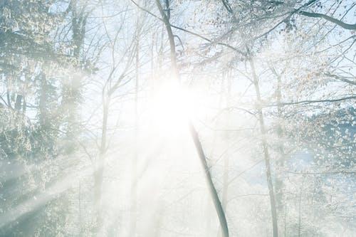 Kostnadsfri bild av blå, kall, morgonsol, skog