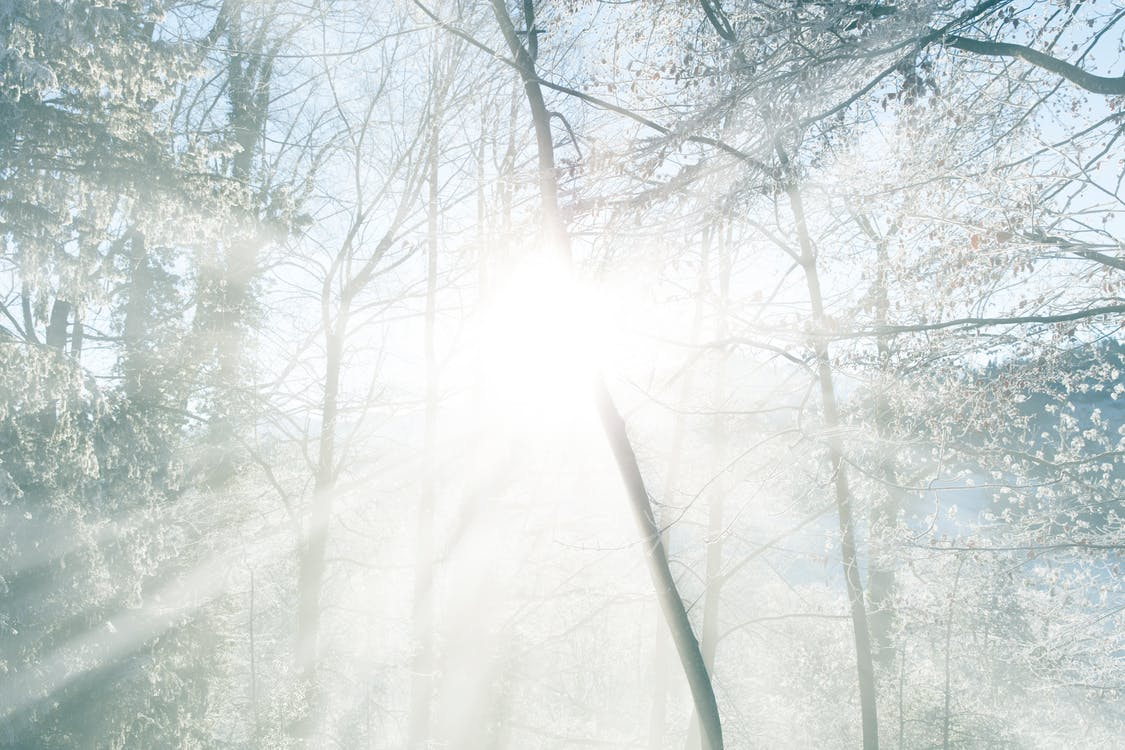 Free stock photo of blue, cold, forest