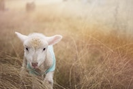 field, animal, countryside