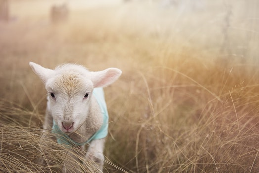 Free stock photo of field, animal, countryside, cute