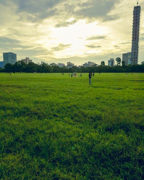 Бесплатное стоковое фото с зеленый, земля, игровая площадка