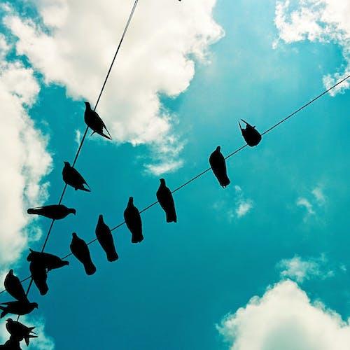 Бесплатное стоковое фото с голубое небо, небо, полдень