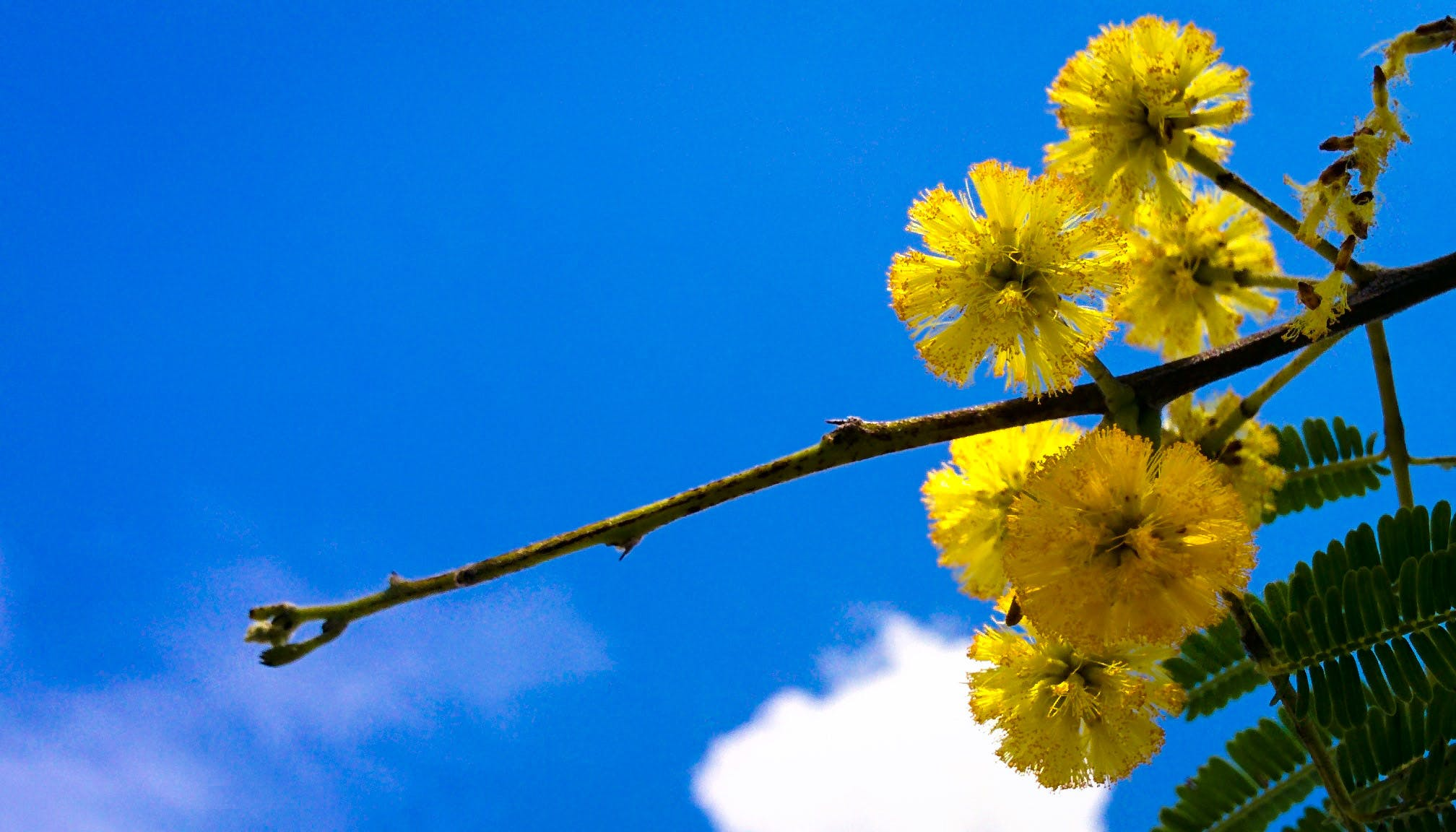 Free stock photo of blue sky, flower, garden, tree