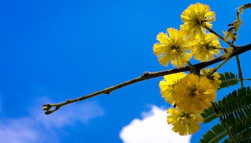 Бесплатное стоковое фото с голубое небо, дерево, желтый
