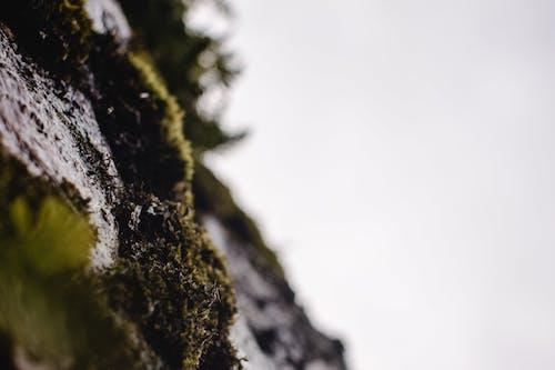 Close-Up Shot of Green Moss on Black Rock