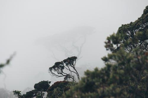 Immagine gratuita di acqua, albero, arte