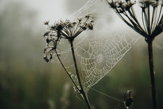 Shallow Focus Photography of a Spiderweb With Raindrops