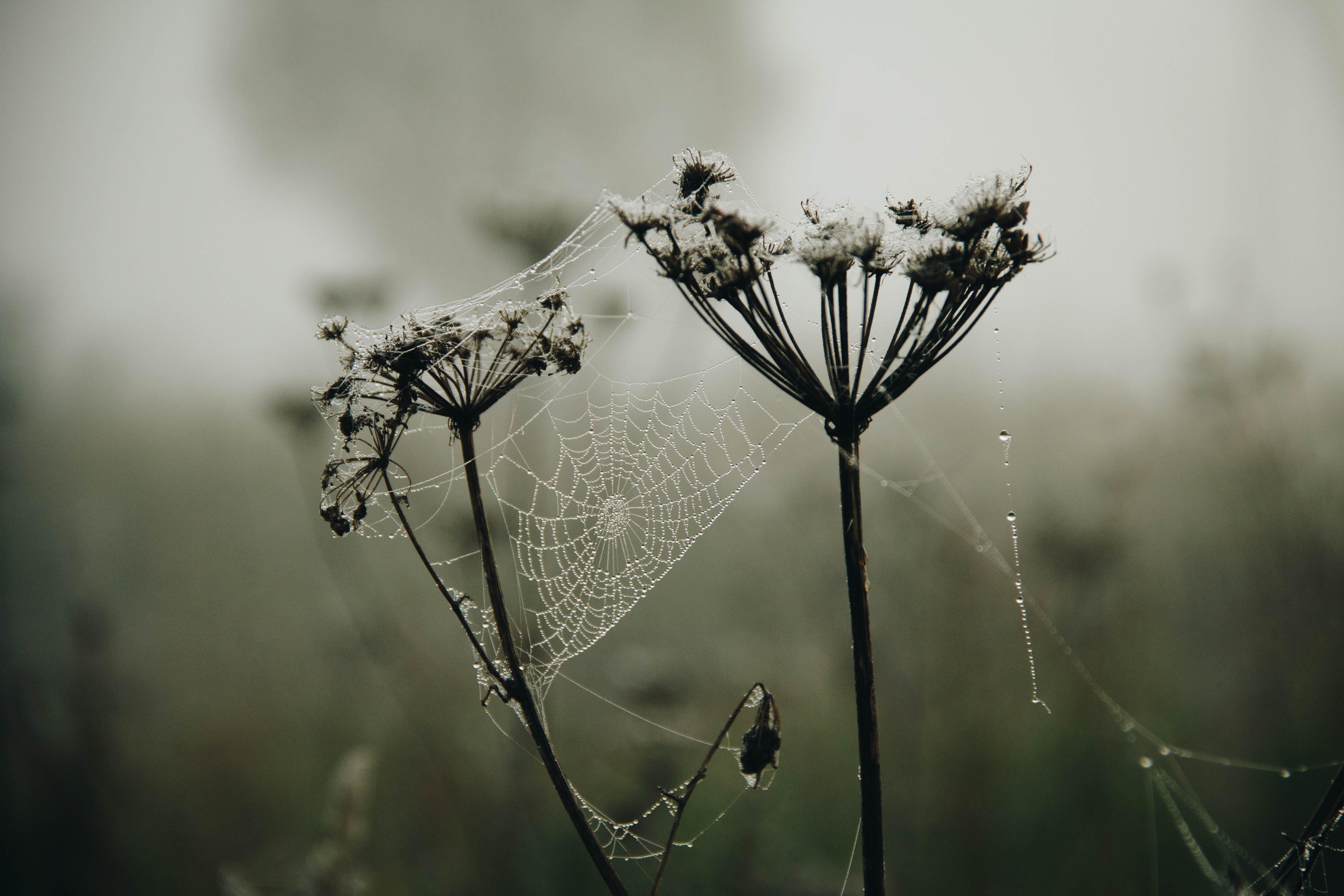 Closeup Photo of White Flowers