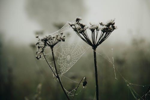 Δωρεάν στοκ φωτογραφιών με ανάπτυξη, ανθισμένος, γκρο πλαν, δίχτυ αράχνης