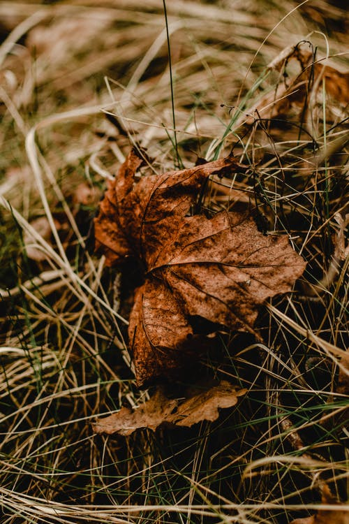 Brown Dried Leaf on Green Grass