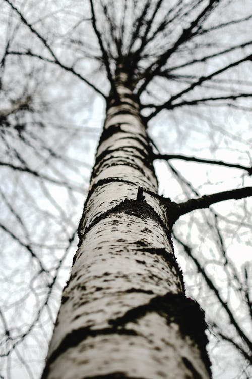 Low Angle Shot of Tree Trunk with Branches