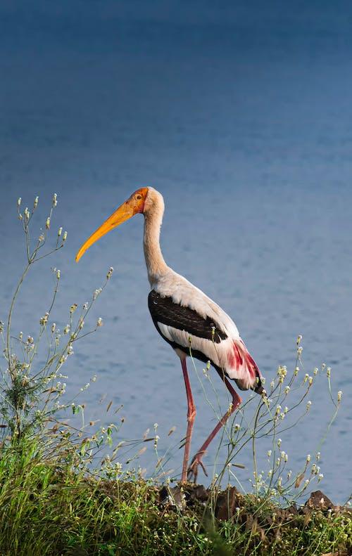 Graceful stork standing in shore near water