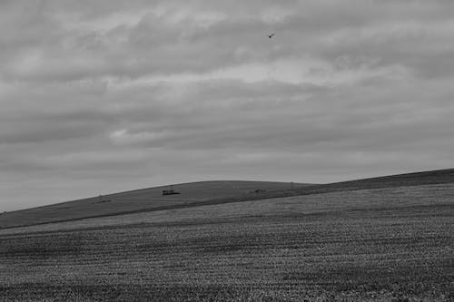 Black and white of meadow with trails near hilly terrain covered with grass in nature against bird flying in countryside
