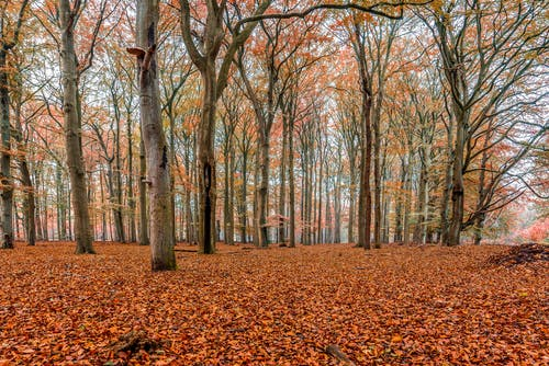 Brown Trees on Brown Dried Leaves