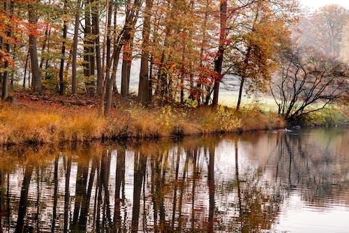 Brown Trees Beside River