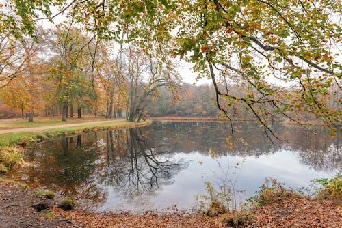 Free stock photo of autumn, beauty, bright