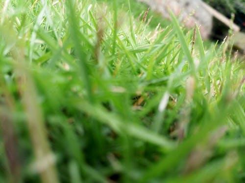 Free stock photo of beautiful grass