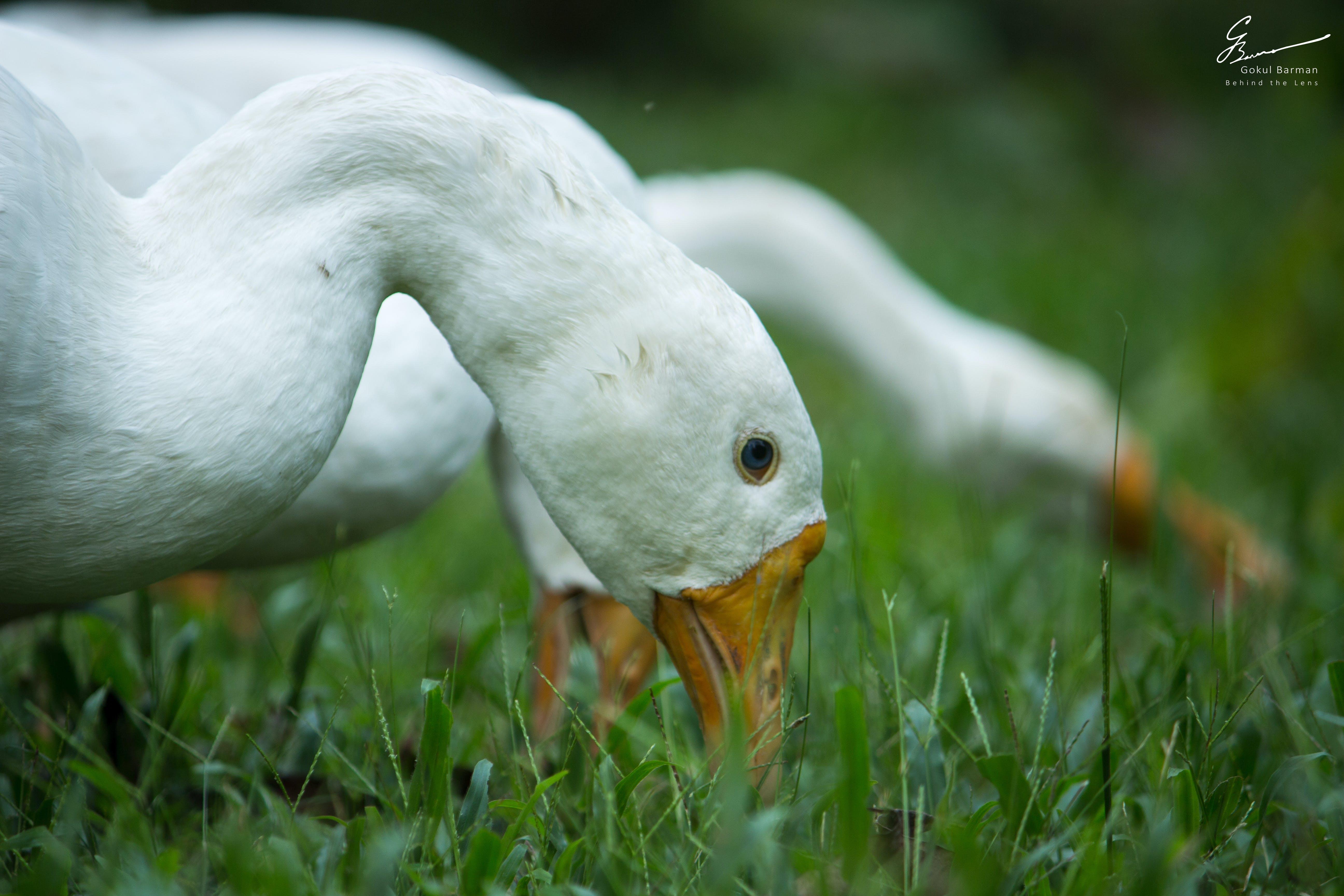 Free stock photo of blue eyes, grass, grass field