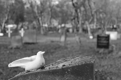 Free stock photo of bird, grave, grave stones