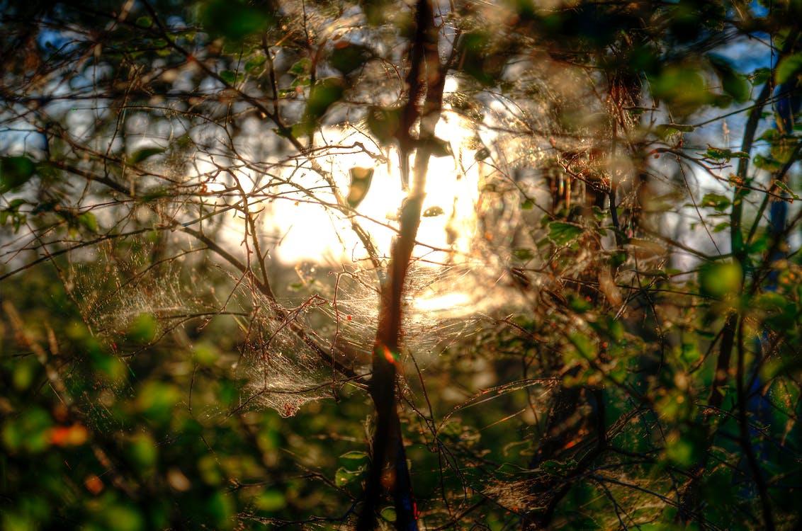 Бесплатное стоковое фото с ветвь, дерево, дневной свет
