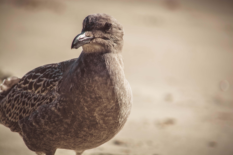 Close-up Photography of a Bird