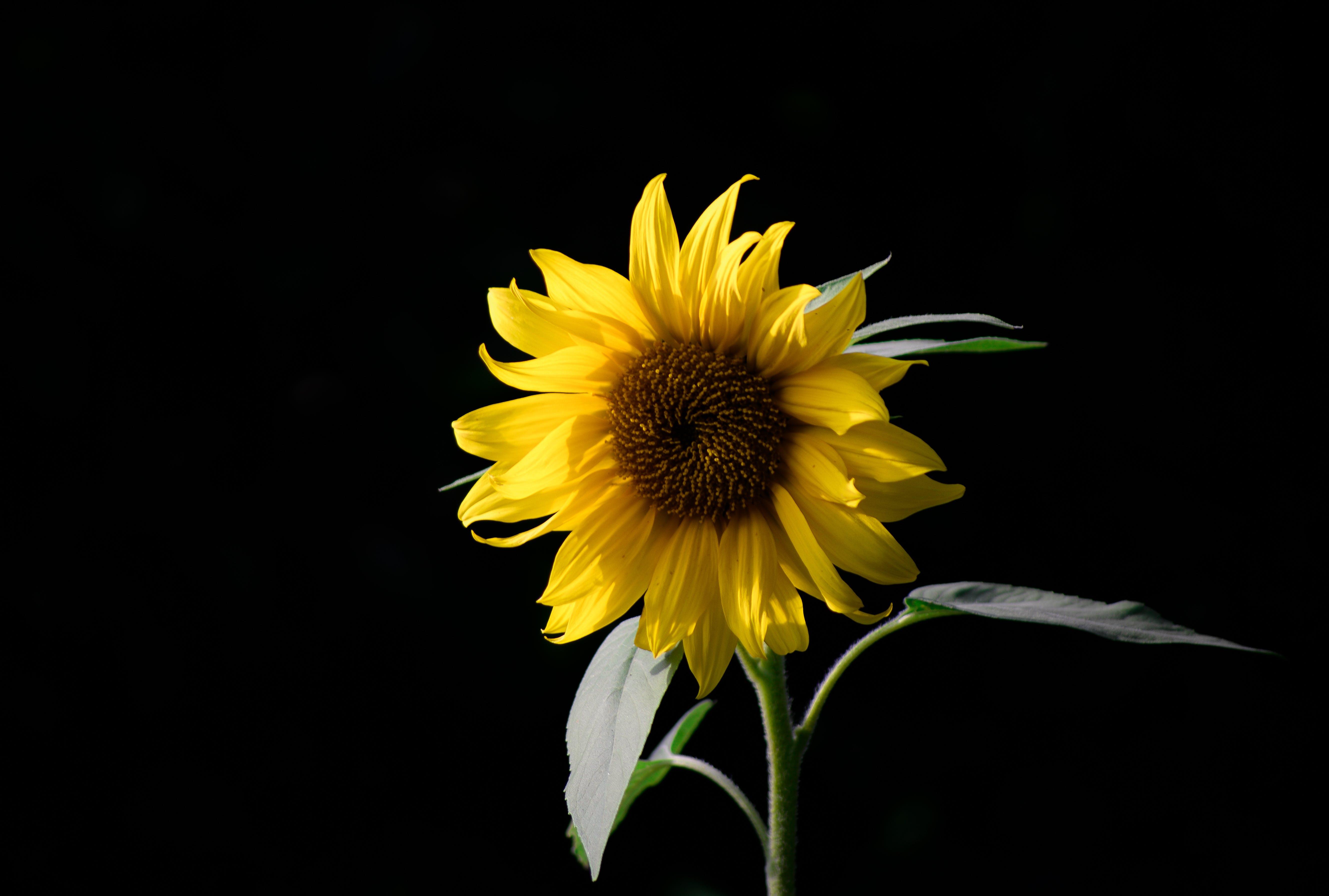 Free stock photo of nature, field, summer, sun