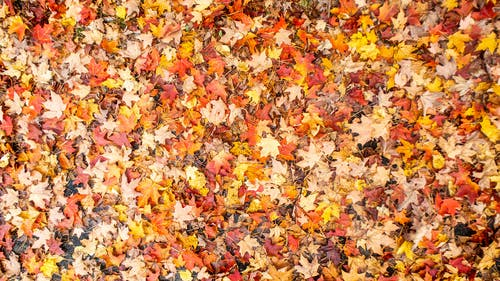 Yellow and Brown Leaves on Ground