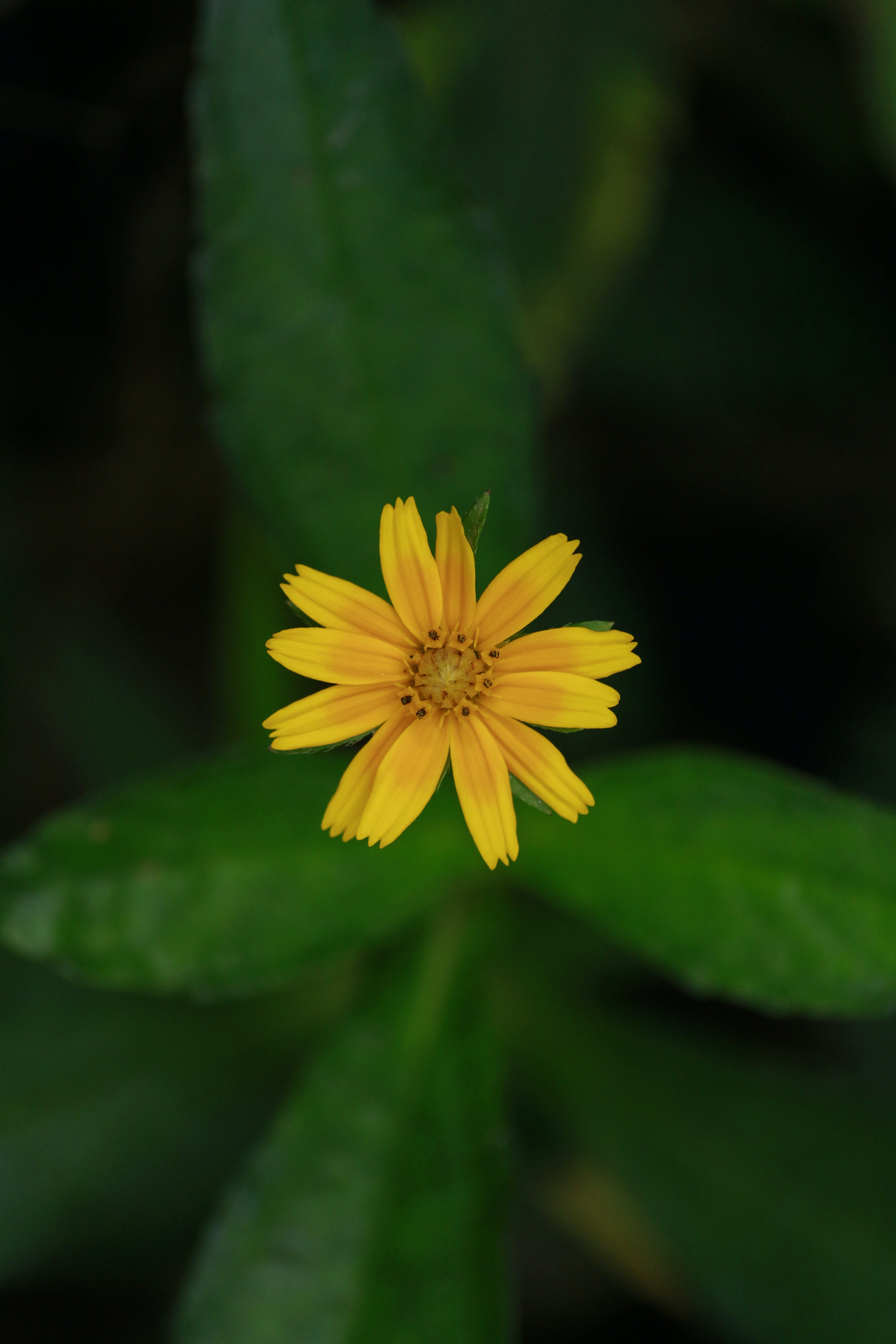 Macro Shot Photography of Yellow Flowers