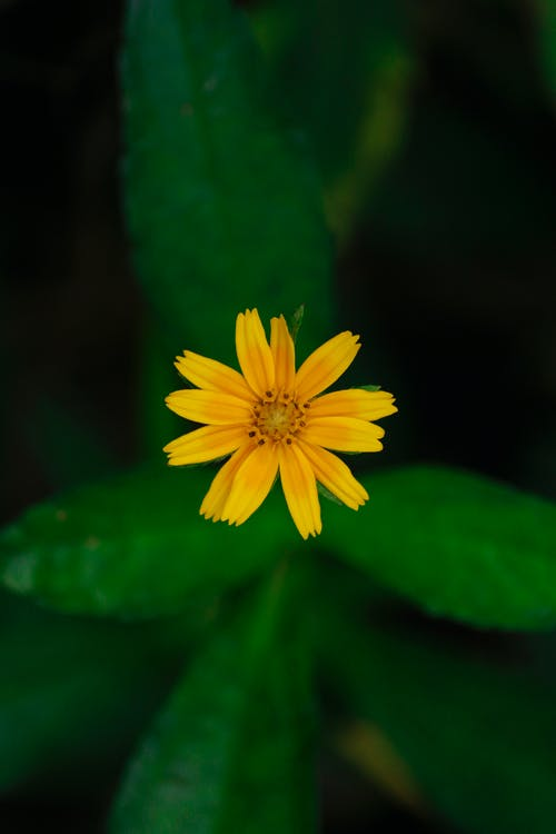 Macro Shot Photography of Yellow Flowers