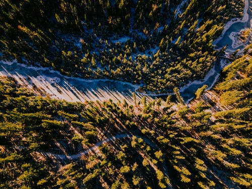 Aerial View of Green Trees and White Snow Covered Ground
