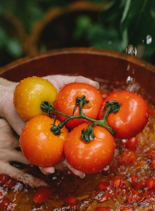 물 그릇에 토마토를 세척하는 자르기 여자