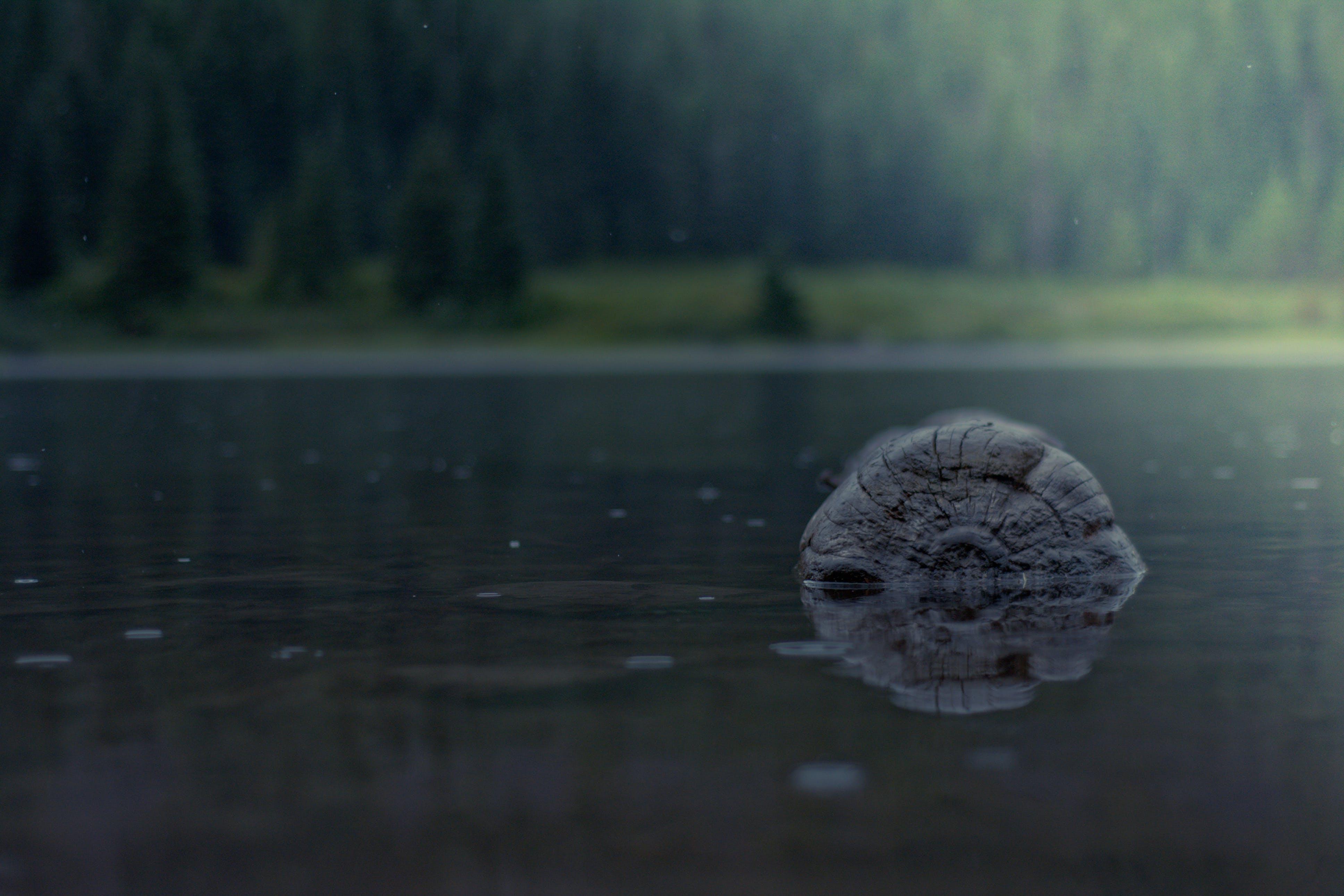Free stock photo of floating log, lake, log