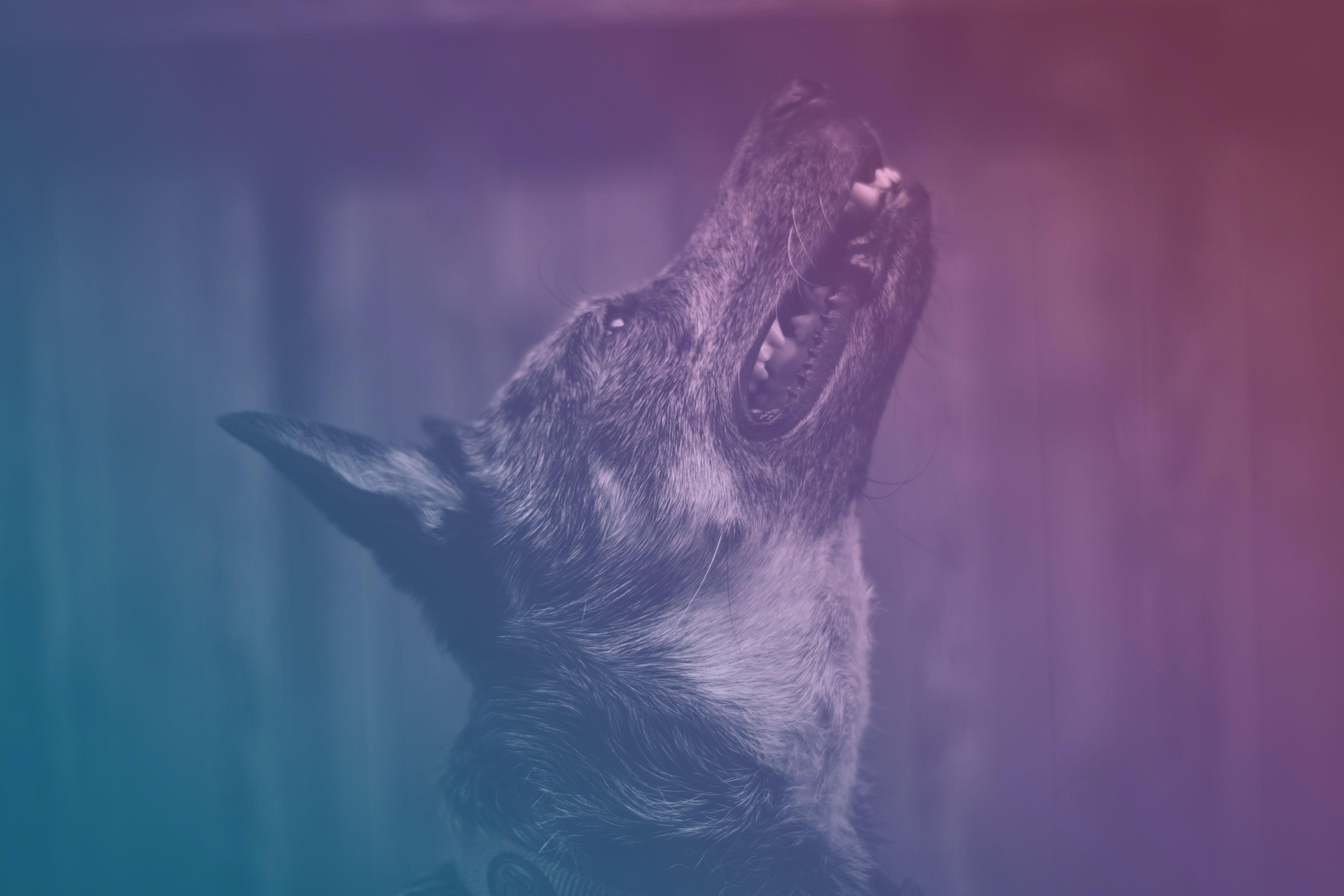 Short-coated Brindle Dog