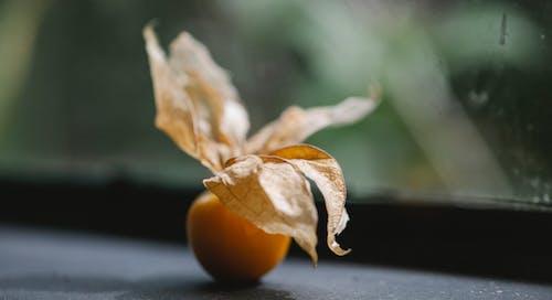 Pomodoro Arancione Sulla Tavola Nera