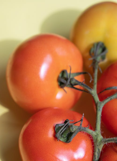 From above of fresh shiny ripe red and orange tomatoes on green stem located on white background