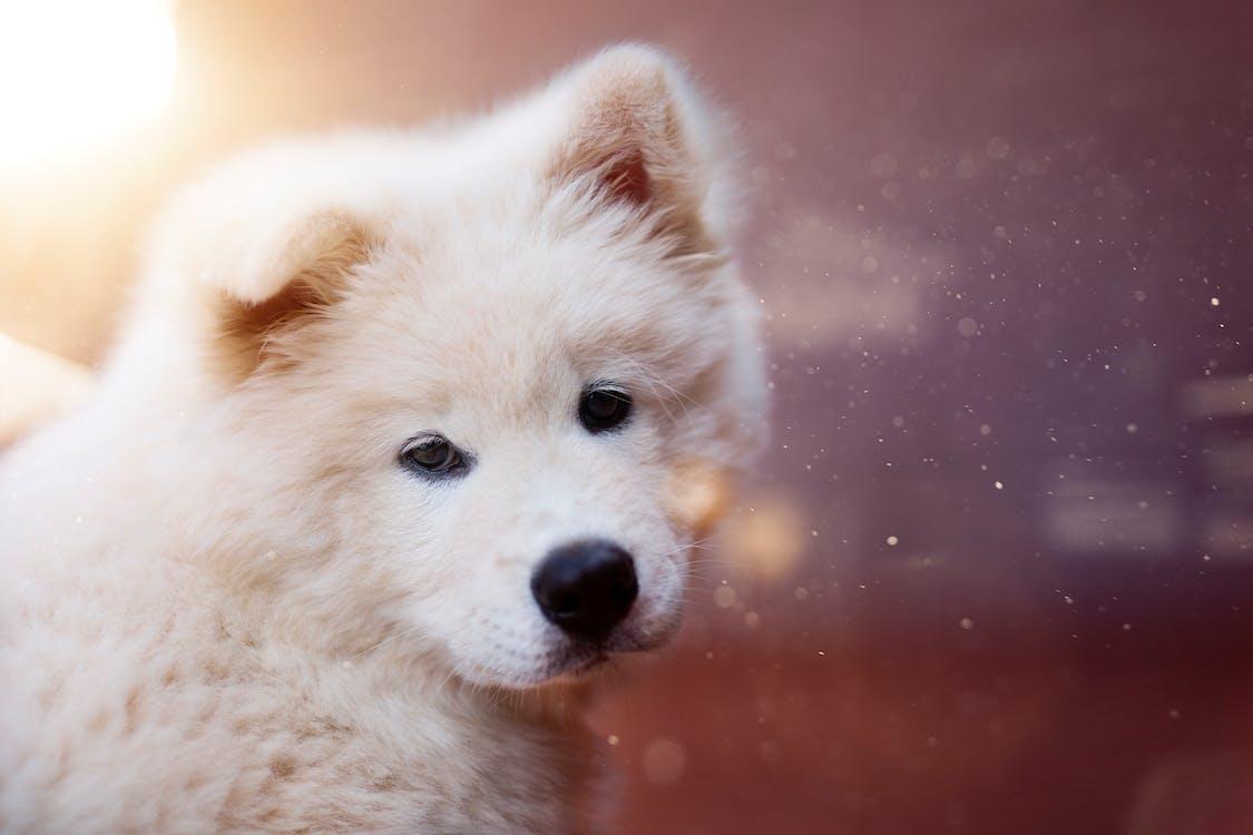 Close-up Photography of Medium-coated Tan Dog