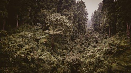 Fotos de stock gratuitas de al aire libre, amanecer, amante de la naturaleza, árbol